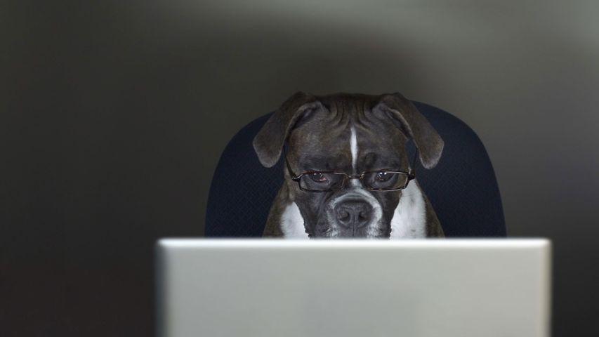 「犬を職場に連れていく日」