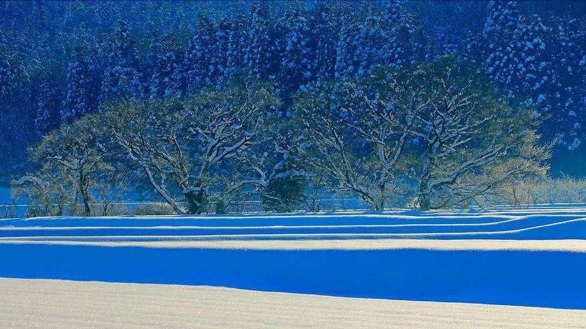 「五泉市の雪景色」新潟