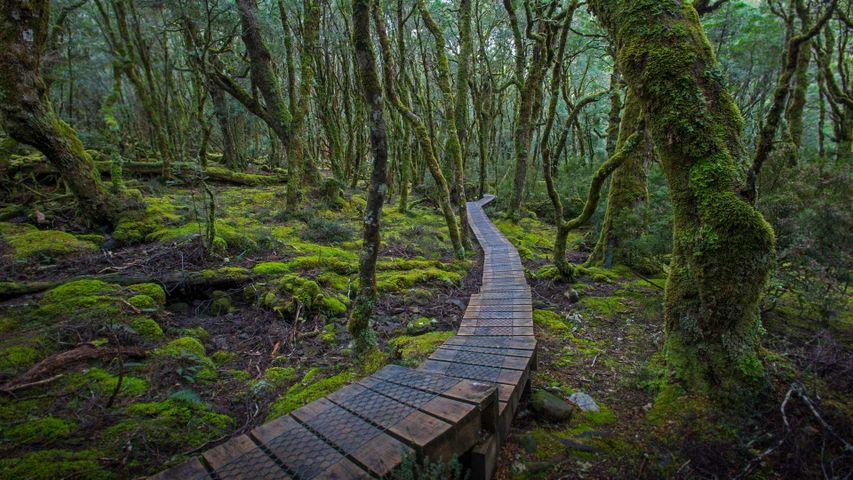 「クレイドル山=セント・クレア湖国立公園」オーストラリア, タスマニア