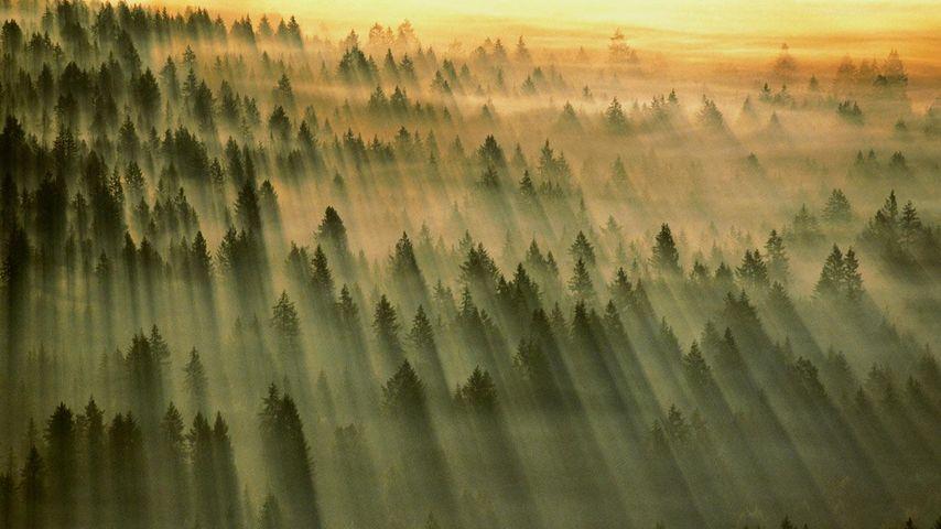 「ギフォード・ピンショー国有林」アメリカ, ワシントン州