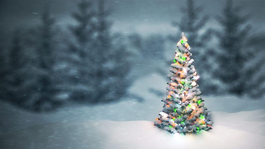「雪の中のクリスマスツリー」