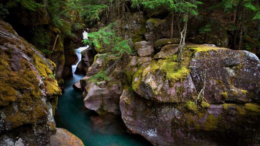 「アバランチ・クリーク」米国モンタナ州, グレイシャー国立公園