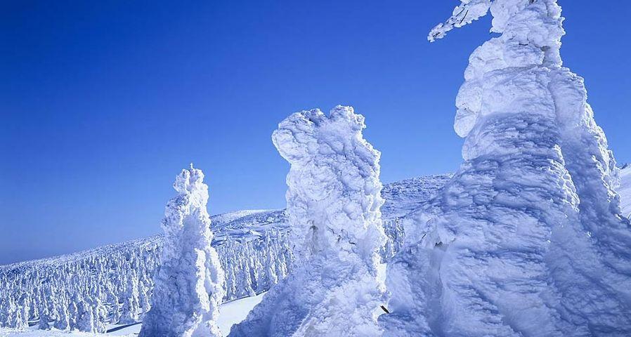 「蔵王樹氷まつり」山形, 蔵王温泉