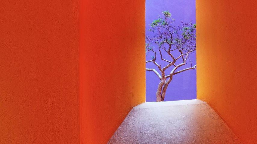 「オレンジ色の路地」メキシコ, サン・ホセ・デル・カボ