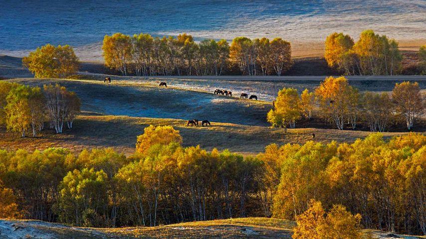 「壩上草原」中国, 河北省