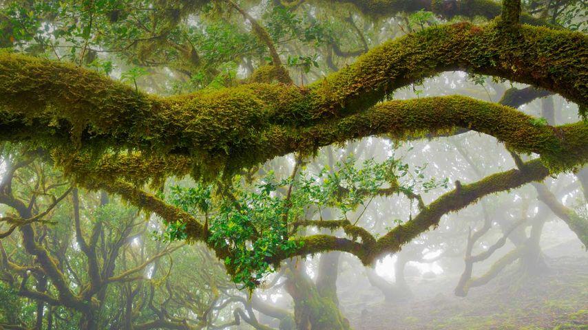 「マデイラ島の照葉樹林」ポルトガル