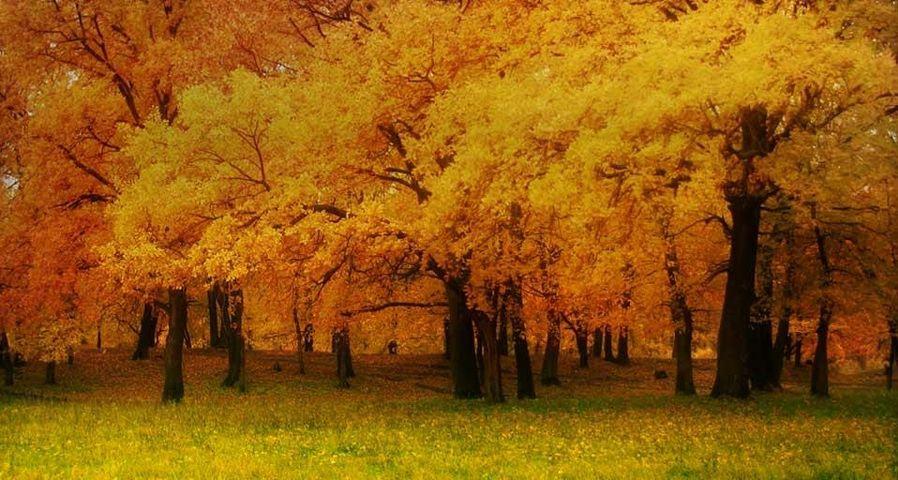 「ヴォルガ河畔の黄葉」ロシア, サマーラ