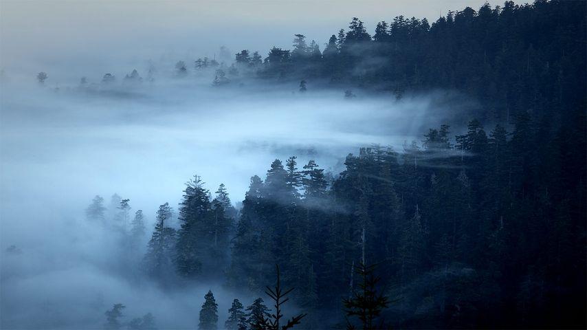 「レッドウッド国立公園の霧」アメリカ, カリフォルニア州