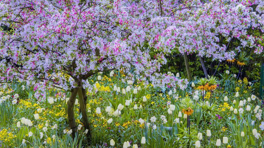 「ジヴェルニーのモネの庭」フランス