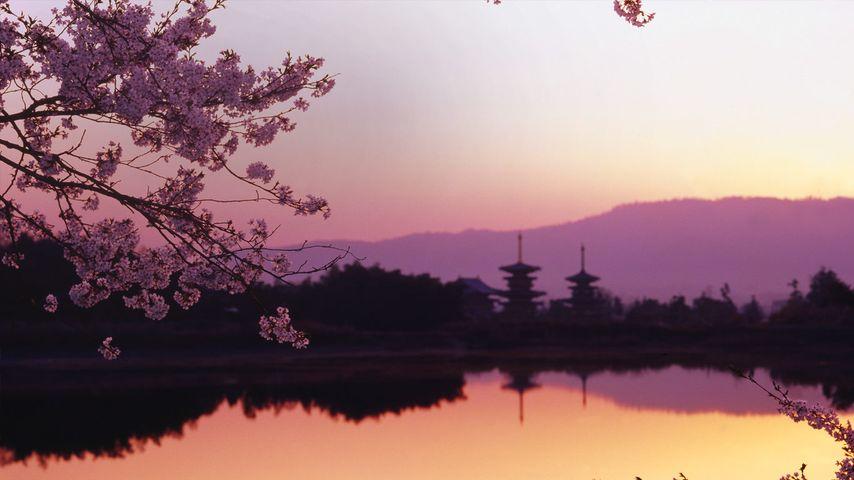 「西の京大池と薬師寺」奈良