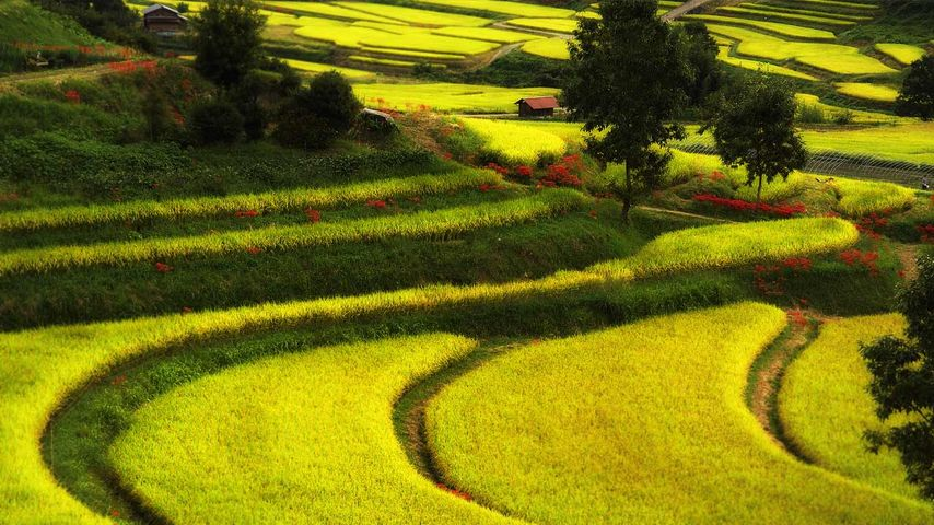 「飛鳥の秋」奈良, 明日香村