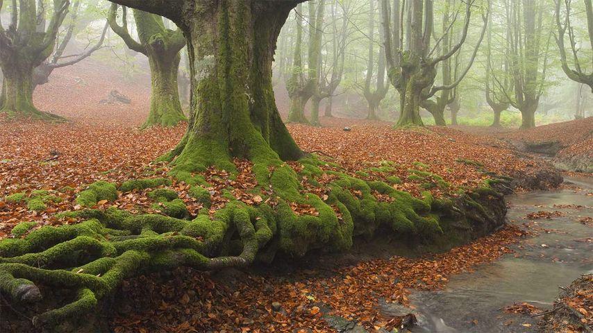「ゴルベア自然公園」スペイン, バスク自治州