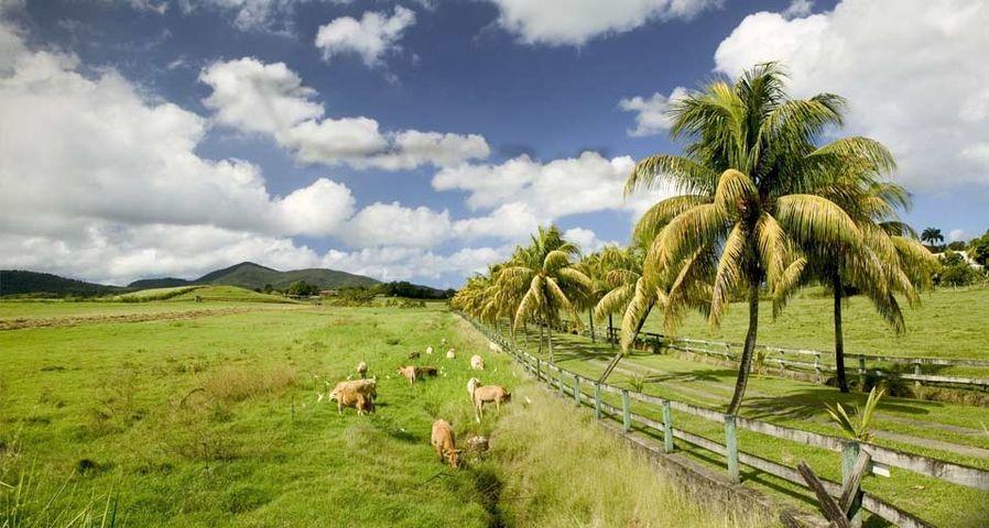 「バス・テール」カリブ諸島, グアドループ島