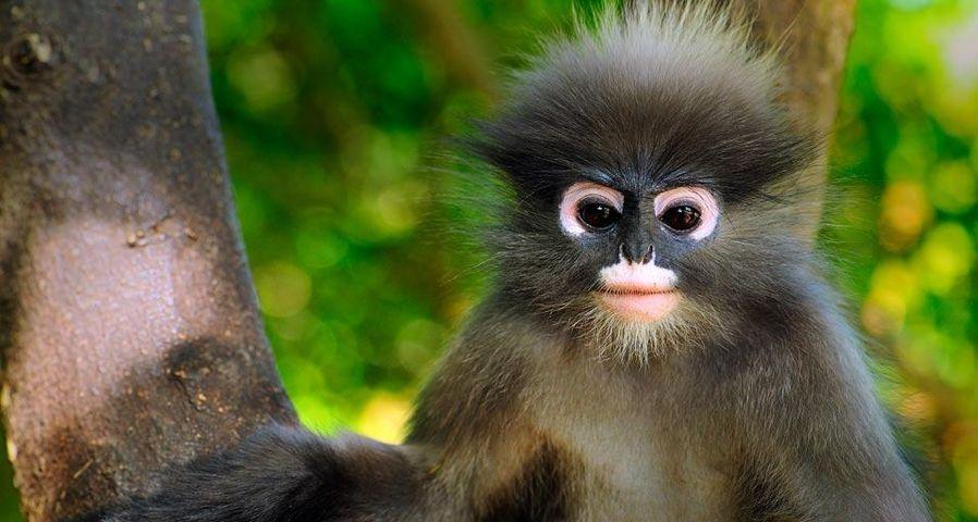 「ダスキールトン」タイ, カオ・サームローイヨート海洋国立公園