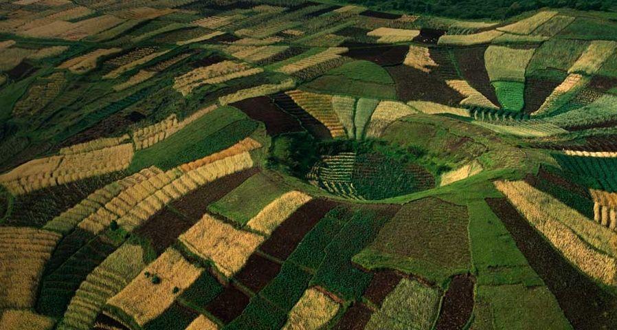 「小麦の段々畑」ルワンダ, ヴィルンガ山地
