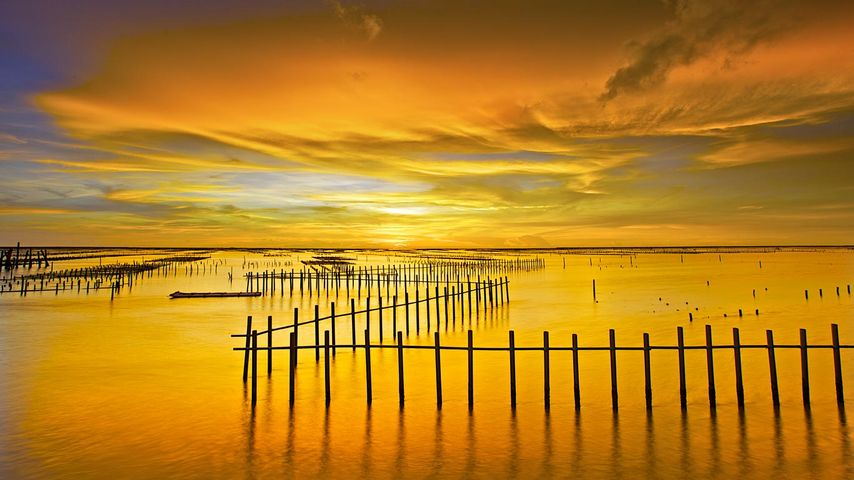「七股潟湖」台湾, 台南