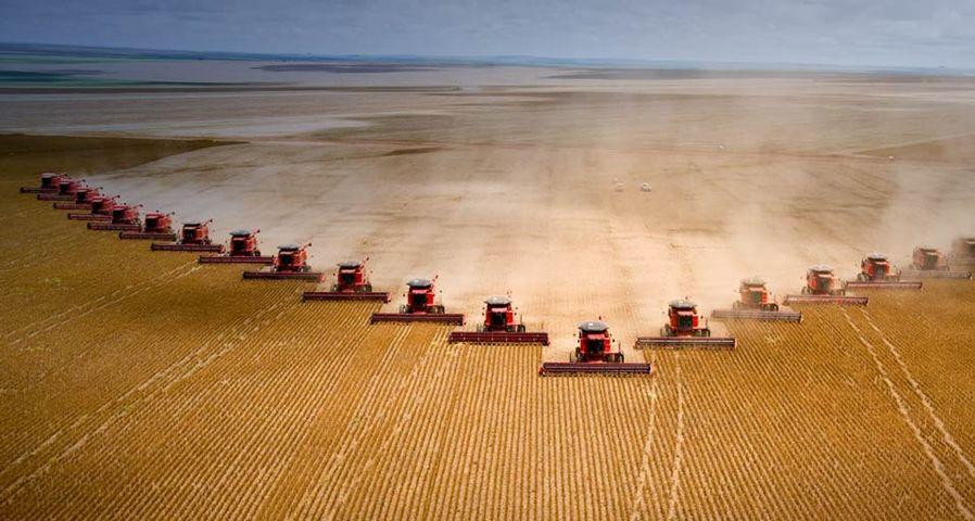 「ファルツーラ農場の大豆の収穫」ブラジル, マット・グロッソ州