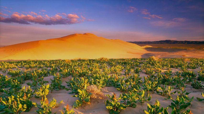 「ホワイトブラフスの砂丘」アメリカ, ワシントン州