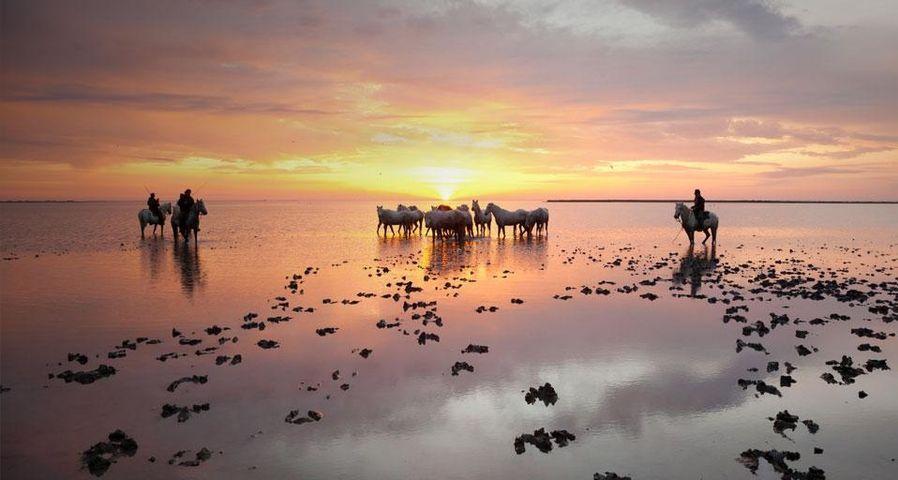 「白馬と馬追い」フランス, カマルグ