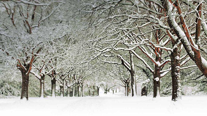 「サウサンプトン公園」イギリス, サウサンプトン