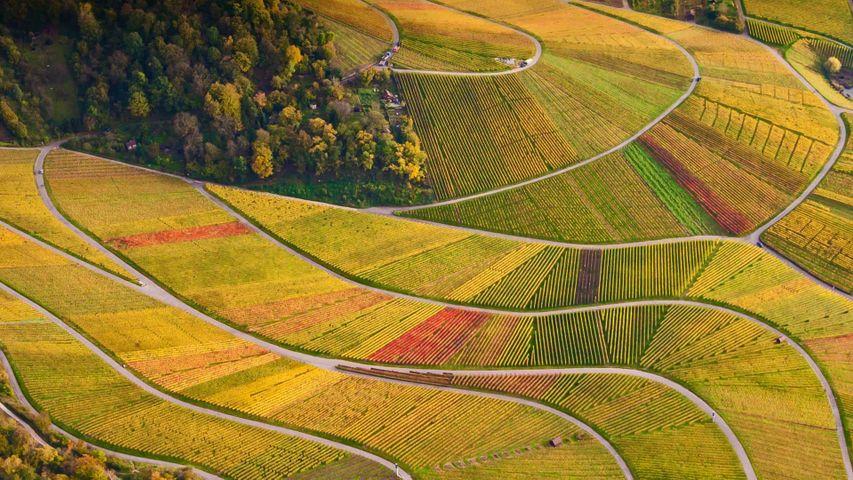 「ローゼンベルクのワイン畑」ドイツ, バーデン=ヴュルテンベルク州