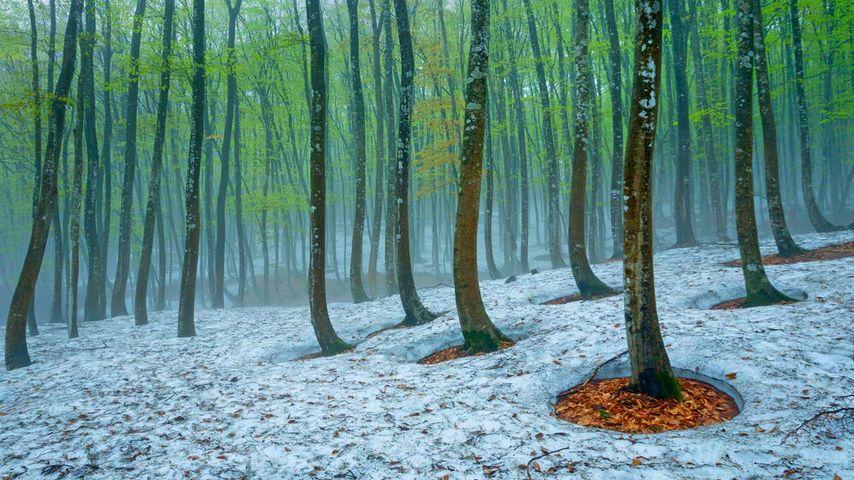 「美人林のなごり雪」新潟, 十日町市