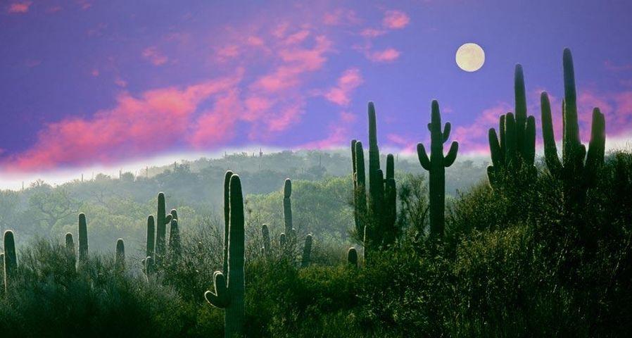「サワロ国立公園」アメリカ, アリゾナ州