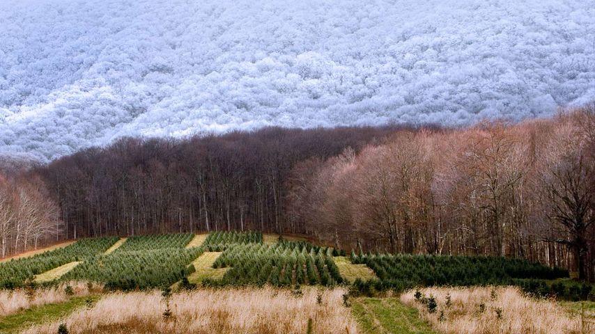 「クリスマスツリー・ファーム」ザイオンビル, ノース・カロライナ州