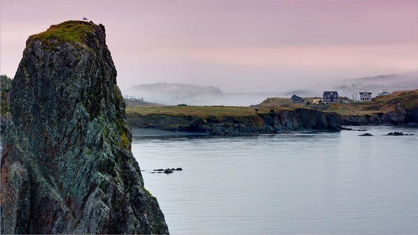 「ボナヴィスタ半島」カナダ, ニューファンドランド島