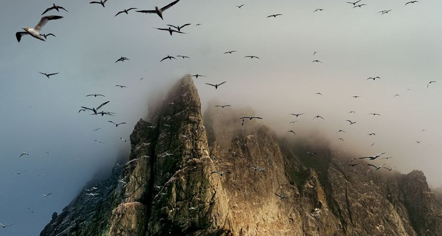 「ボーレー島」スコットランド, セントキルダ島