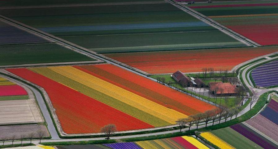 「オランダの花畑」オランダ, アムステルダム