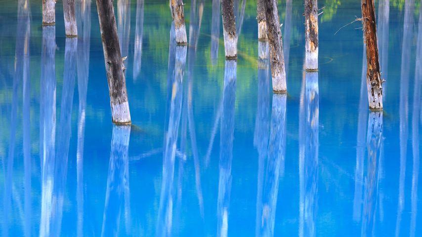 「美瑛白金青い池」北海道