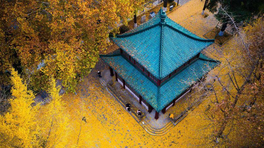 「秋の玄武湖公園」中国, 江蘇省