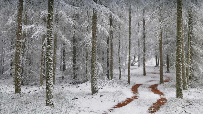 「北ヴォージュ自然公園」フランス, アルザス・ロレーヌ地方