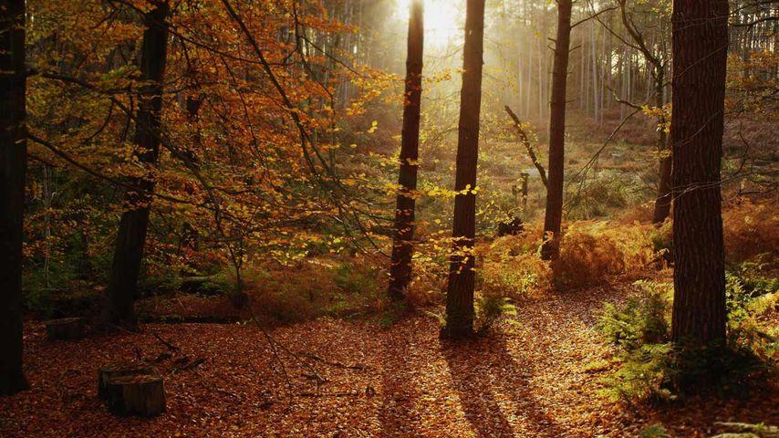 「チェシャーの紅葉」イギリス, チェシャー州