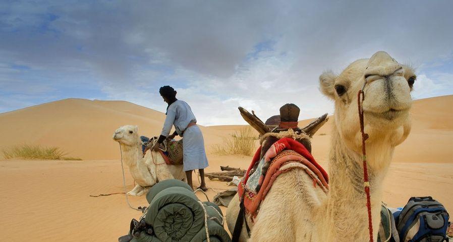 「アドラール山のラクダの隊商」モーリタニア, サハラ砂漠