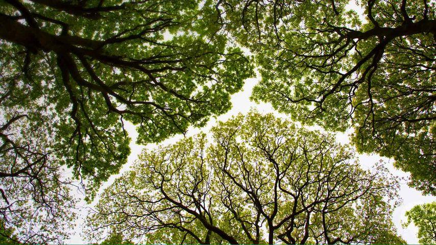 「ラウド・シー・ウッド自然保護区」イギリス, カンブリア