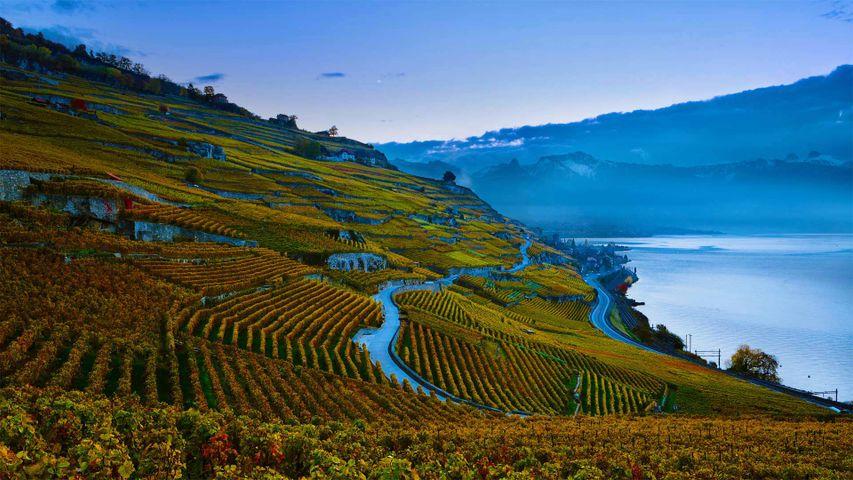 「レマン湖とブドウ畑」スイス, ラヴォー地区