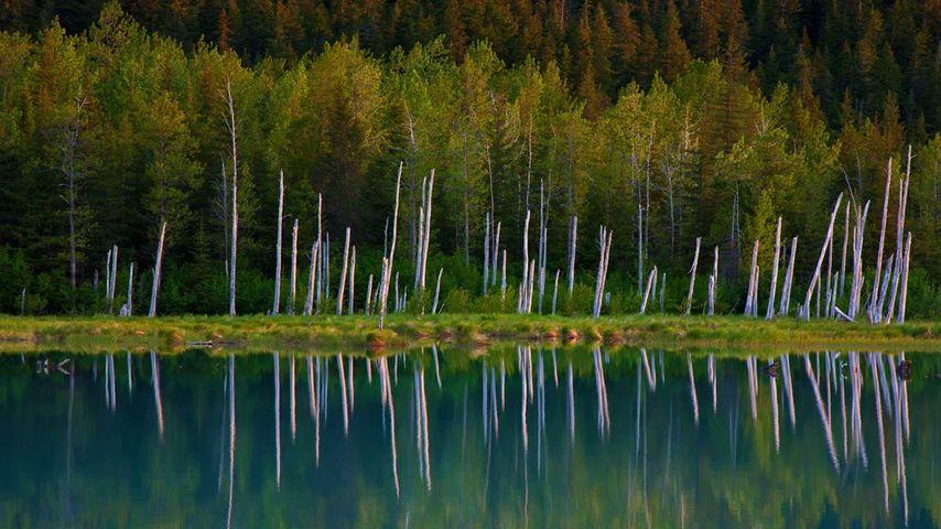 「ポーテージ湖」アメリカ, アラスカ