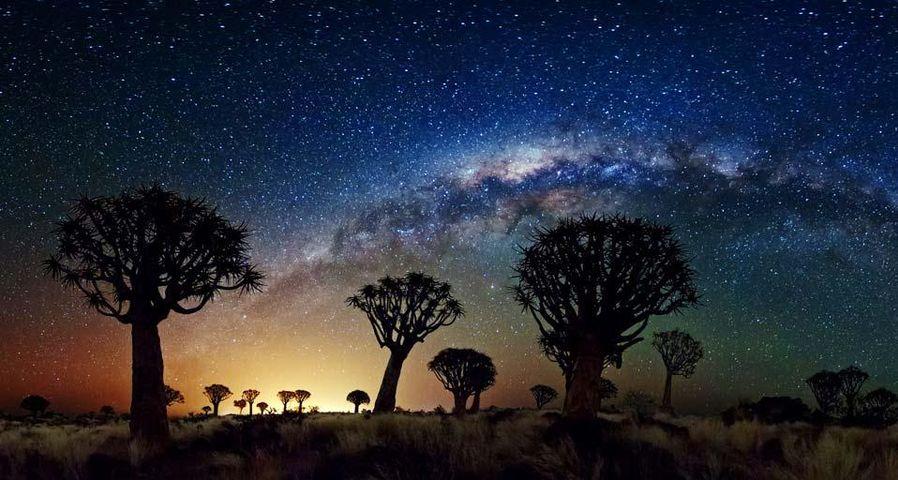 「クイバーツリー・フォレストと銀河」ナミビア