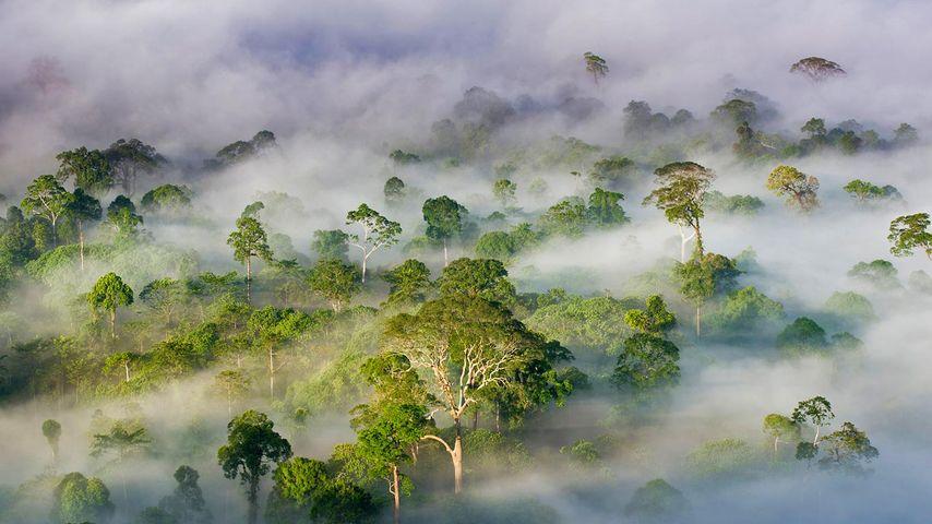 「ダヌムバレー保護地域」マレーシア, サバ州