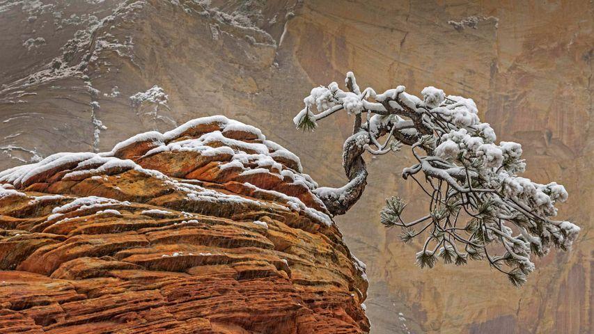 「砂岩の上の松」アメリカ, ユタ州