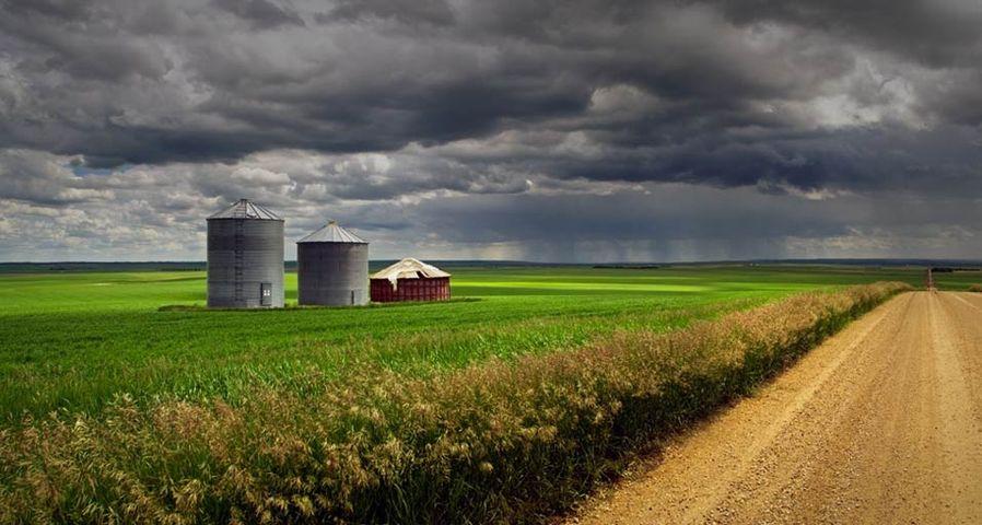 「オイエンの穀倉地帯」カナダ, アルバータ州