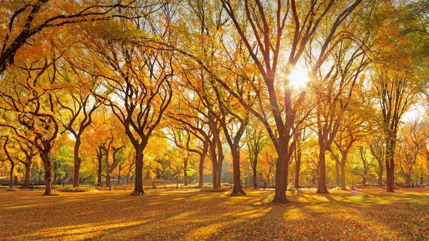 「アメリカニレの散歩道」米国ニューヨーク州, セントラル・パーク