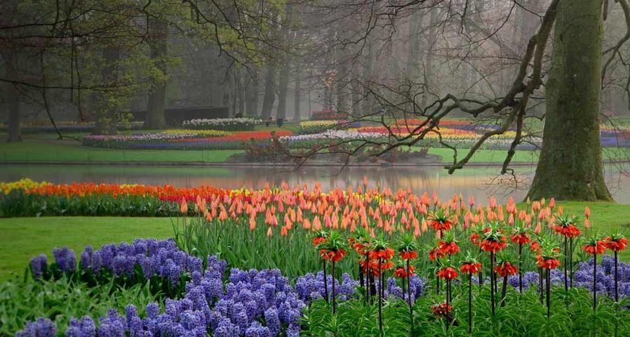 「キューケンホフ公園」オランダ, リッセ