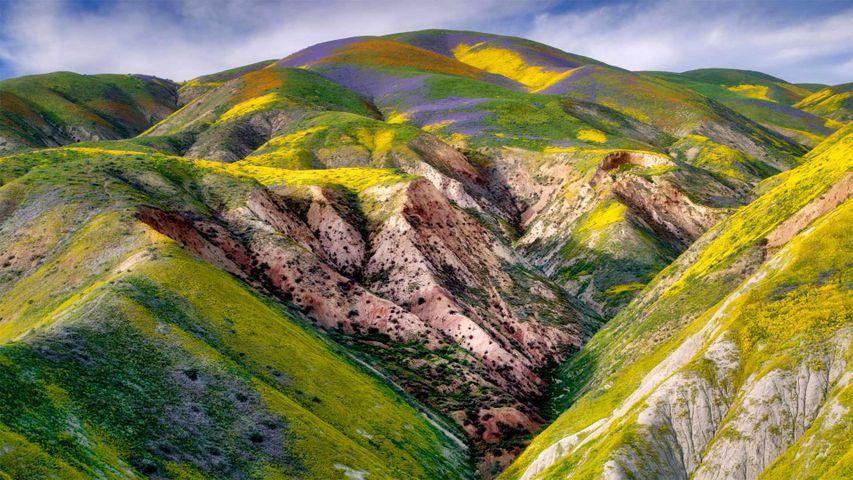 「カリゾ平原の野の花」米国, カリフォルニア州