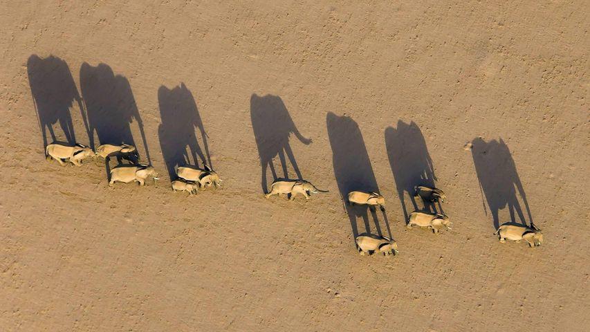 「デザート・エレファント」ナミビア, ダマラランド