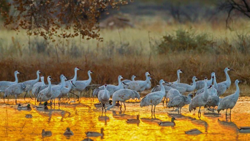 「ボスケ・デル・アパッチ国立野生動物保護区」米国, ニューメキシコ州