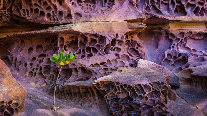 「蜂の巣状風化岩」オーストラリア, キンバリー地域
