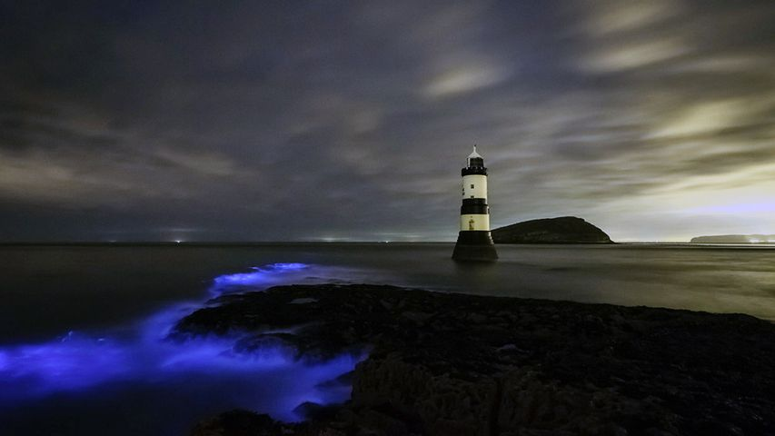 「灯台と夜光虫」イギリス, ウェールズ